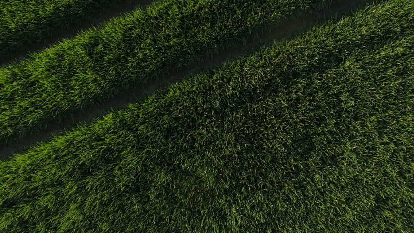 Aerial shot of green field with floral pattern | Shutterstock HD Video #32826202