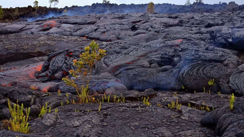 Lava destroys bush time lapse burn fire Day daytime Glowing Hot flow from Kilauea Active Volcano Puu Oo Vent Active Volcano Magma