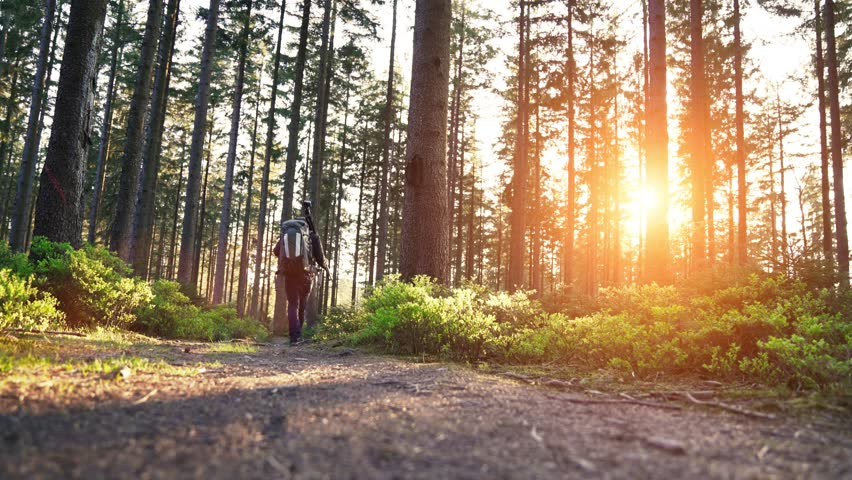 Hiker hiking in forest at sunset. hikers enjoying the awesome view at sunset in a beautiful german forest Schwarzwald landscape. | Shutterstock HD Video #32904694