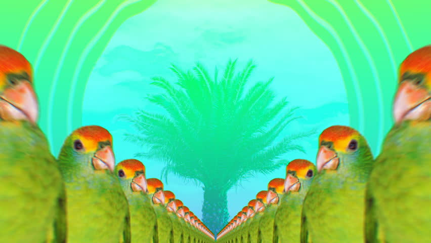 Minimal Motion collage art. Fashion Many Parrots Tropical vibes Beach Party mood  #32923654