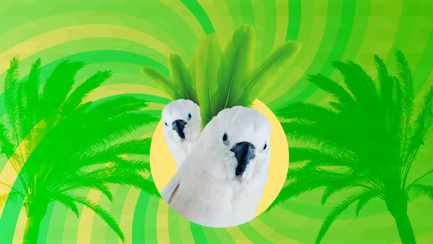 Minimal Motion art.Fashion Parrots my Tropical life. Party and club style concept
