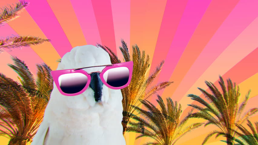 Minimal Motion collage art. Fashion Parrot with sunglasses. Beach Accessories concept Beach party mood