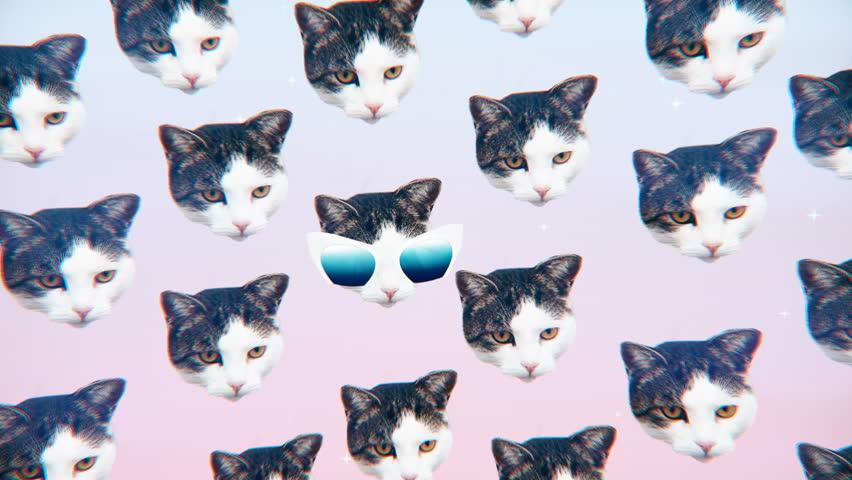 Minimal Motion design Fun Art. Kitty glamour style. Fashion Sunglasses mood