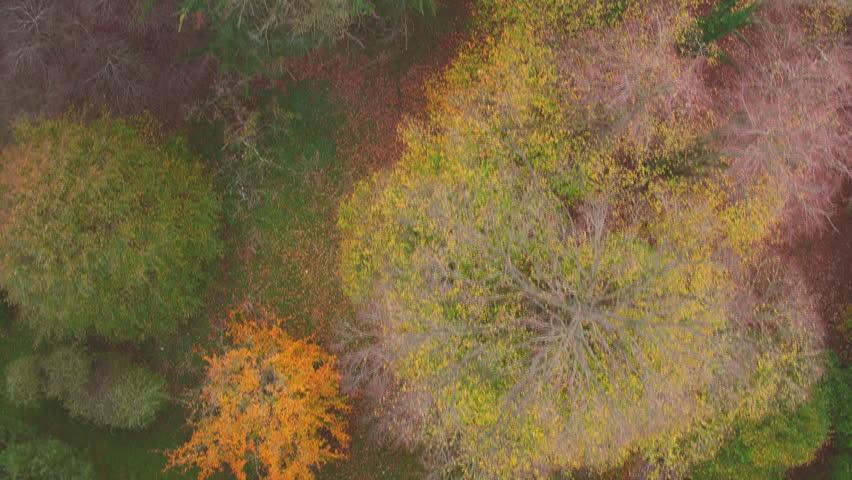 Aerial bird view of autum trees