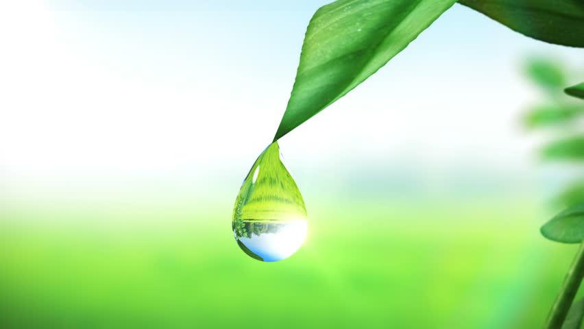 Dewdrop on leaf, Beautiful animation. HD 1080. #3294461
