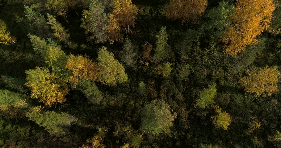 Autumn color forrest, Cinema 4k aerial tilt view over colorful autumn trees, revealing fjeld tunturi mountains, on a sunny and rainy fall day, near pallas-yllas national park, Lapland, Finland | Shutterstock HD Video #32987740