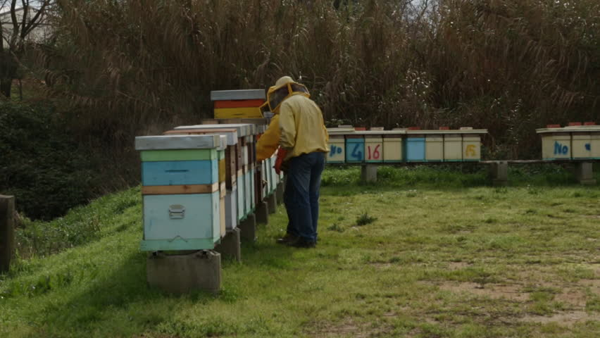 beekeepers working with hives #33026932