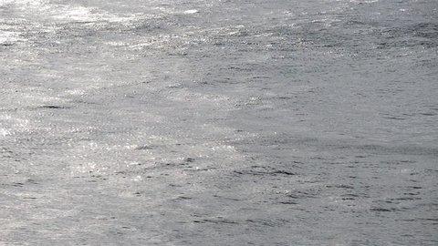 intense rain with wind on the summer sea