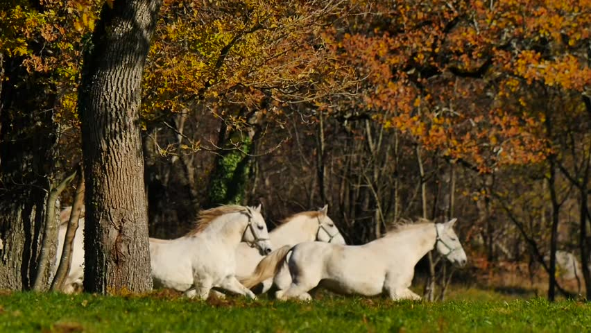 Horses running distant | Shutterstock HD Video #33075352