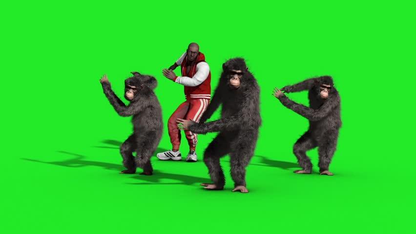 Group Chimpanzee Man House Dance Dancer Green Screen 3D Rendering Animation Animals | Shutterstock HD Video #33134887