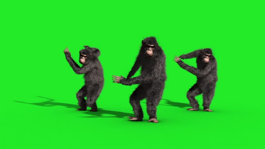 Group Chimpanzee House Dance Dancer Green Screen 3D Rendering Animation Animals | Shutterstock HD Video #33134890