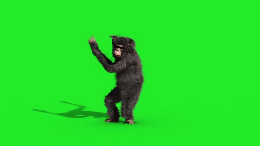 Chimpanzee House Dance Dancer Green Screen 3D Rendering Animation Animals | Shutterstock HD Video #33134893