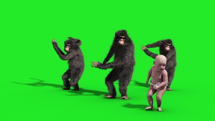 Group Chimpanzee Baby House Dance Dancer Green Screen 3D Rendering Animation Animals | Shutterstock HD Video #33134896