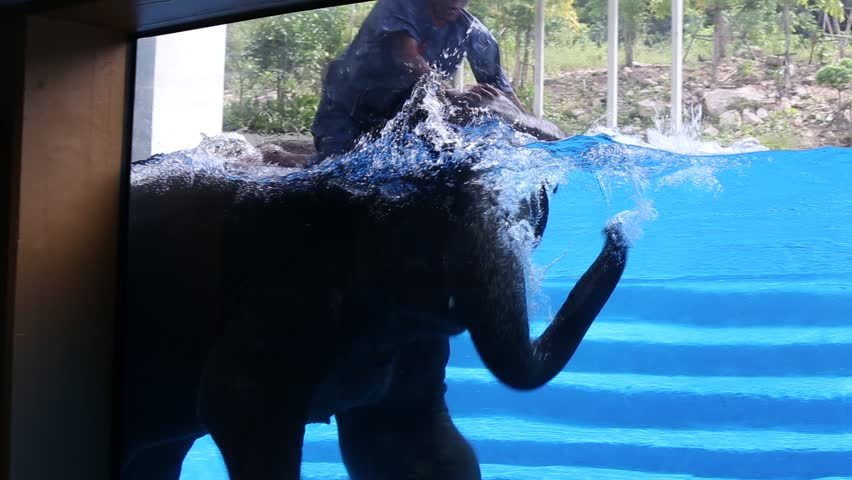 PATTAYA, THAILAND - NOVEMBER 09, 2017 : Large elephant bathes in the pool with a glass window in front of the children. Pattaya is one of the most popular traveling places in Thailand | Shutterstock HD Video #33197470