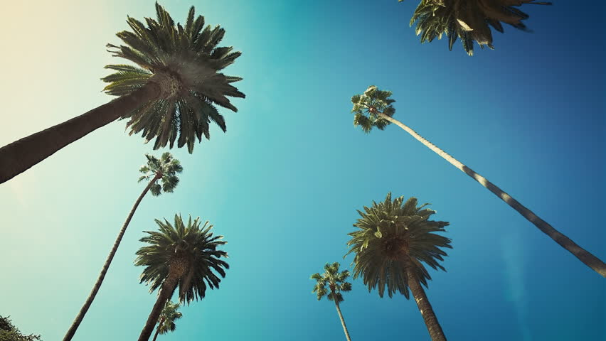 Driving through Beverly Hills. Los Angeles, California. Palm trees against a summer sky. United states. Green. | Shutterstock HD Video #33217057