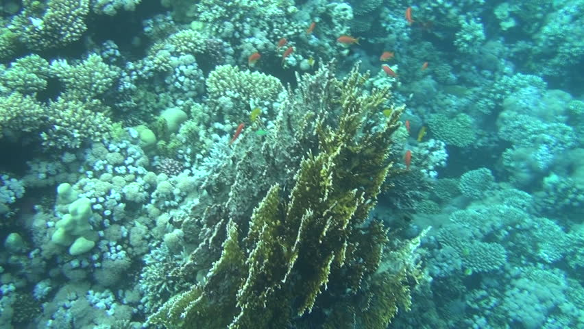 Colorful fishes on reef 42 | Shutterstock HD Video #3325652