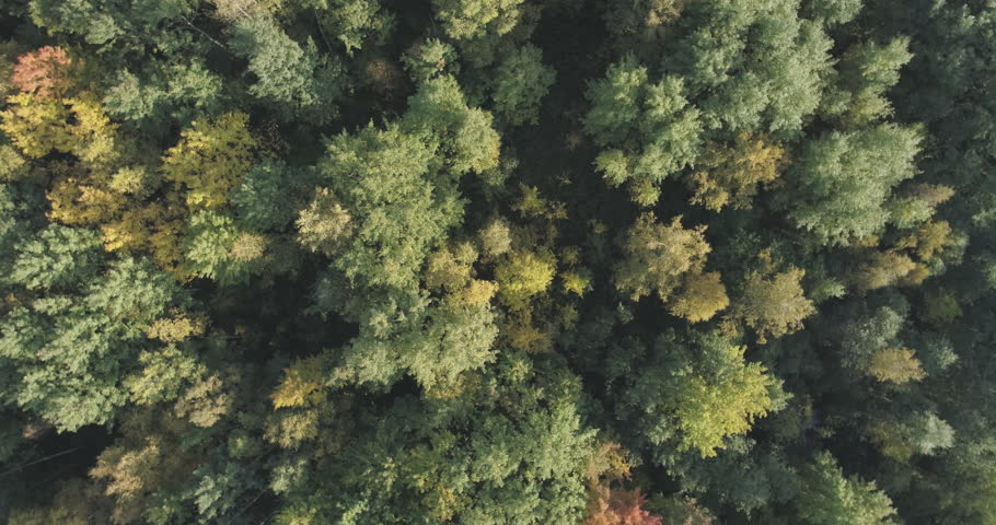Aerial rotate top view flight over autumn trees in forest in september | Shutterstock HD Video #33446215