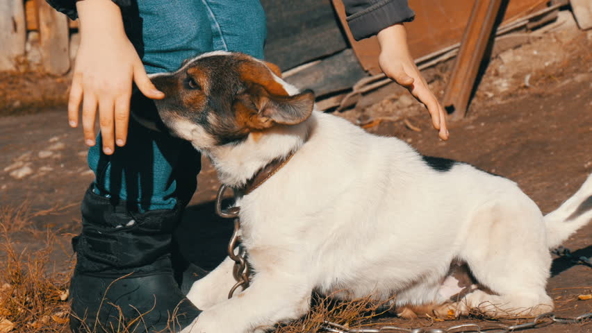 A boy teenager in jeans and a jacket plays with a puppy on a chain | Shutterstock HD Video #33470290