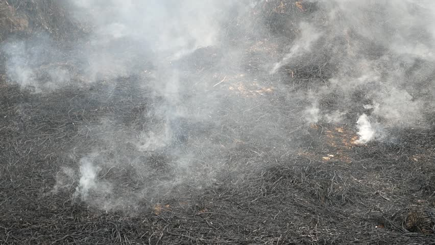 Traditional straw burning in thailand, stubble burning, slash and burn, clearing and regenerating, field with fire  | Shutterstock HD Video #33642733