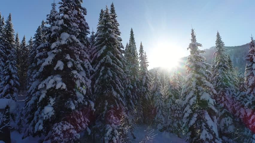 Snow-covered fir forest   Shutterstock HD Video #33699964