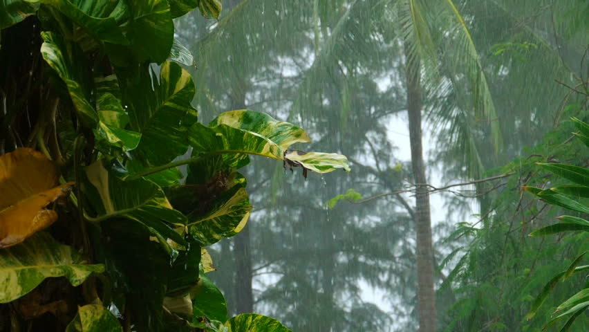 Tropical downpour in the courtyard of the hotel, Phuket Thailand, slow motion #33706396