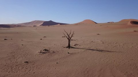 4K high quality aerial video drone view of lone dead tree in famous endless sand sea and Sossusvlei Namib Desert red sand dunes on sunny morning in Namib-Naulkuft Park in Namibia, southern Africa