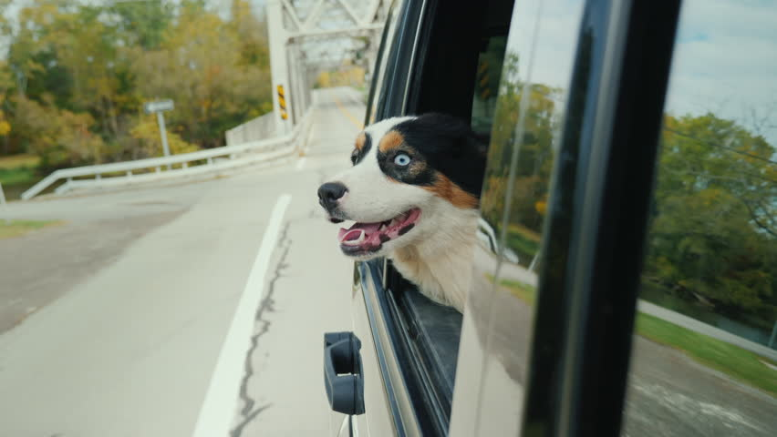 The car drives across the bridge, a dog looks out the window, looks at everything with surprise   Shutterstock HD Video #33758908