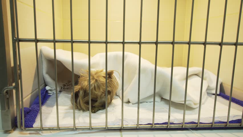 Dog in a cage on recovery from an operation in a veterinary clinic. Postoperative hospital in an animal hospital with cages for pets. Hotel for pets