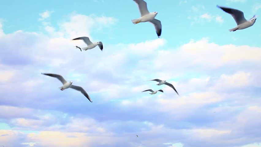 Seagulls following the cruise ship. Flying against beautiful sky