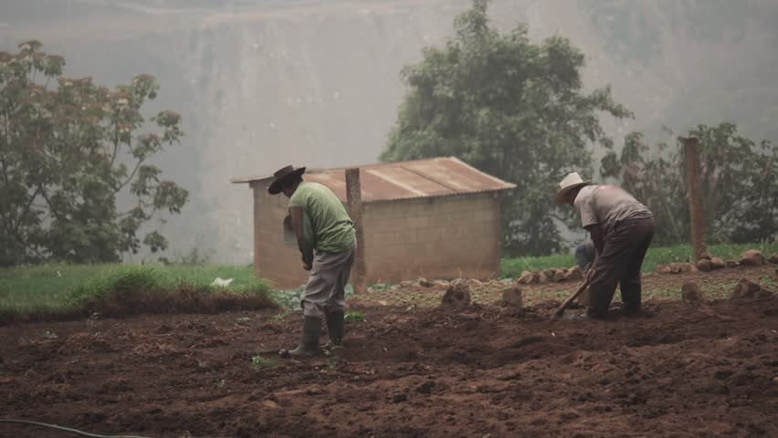 Farmers plowing field to cultivate potatoes on Peru.