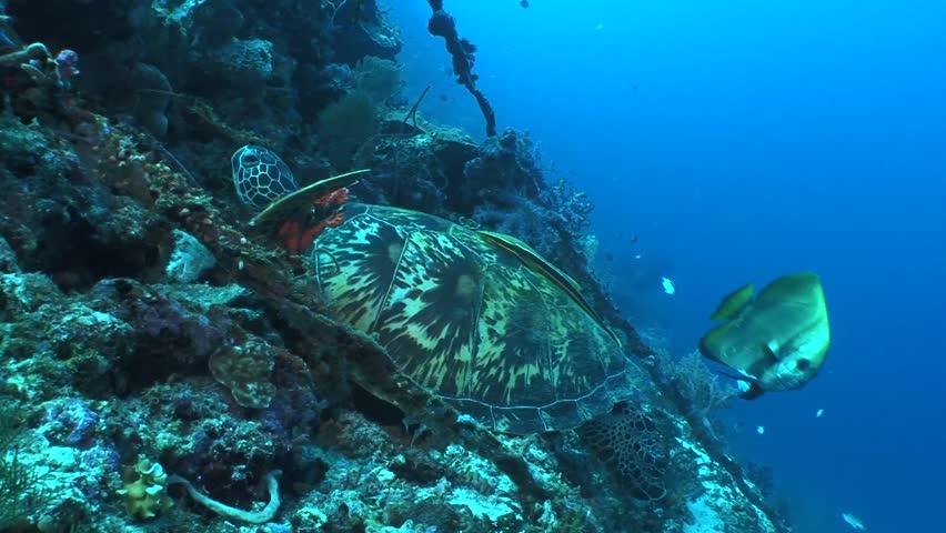 Turtle   Shutterstock HD Video #3402956
