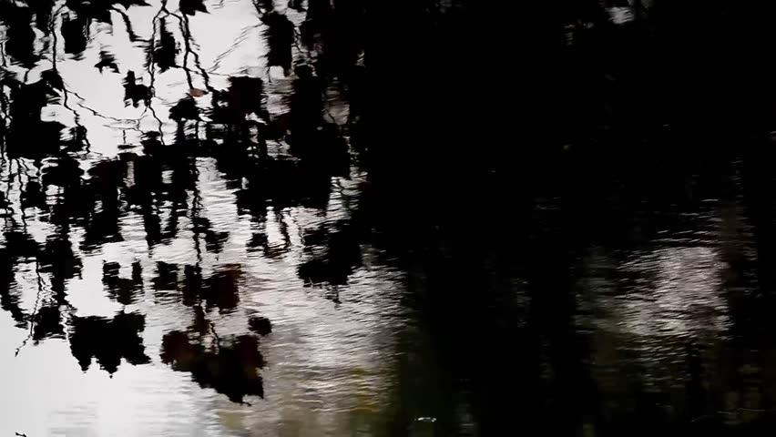 Berlin Tiergarten forest | Shutterstock HD Video #34038205