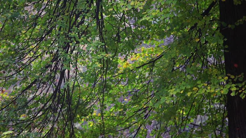 Berlin Tiergarten forest | Shutterstock HD Video #34038226