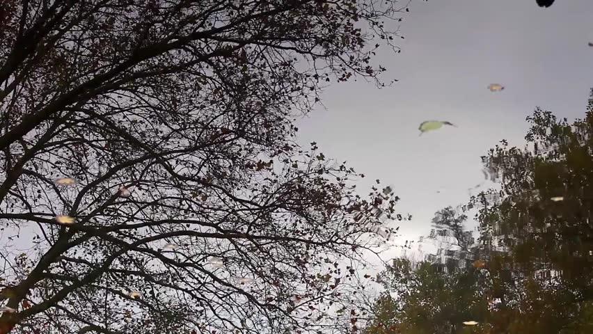 Berlin Tiergarten forest | Shutterstock HD Video #34038268