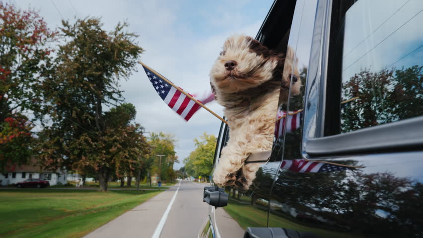 A patriotic dog is traveling in a car, an American flag is flying alongside