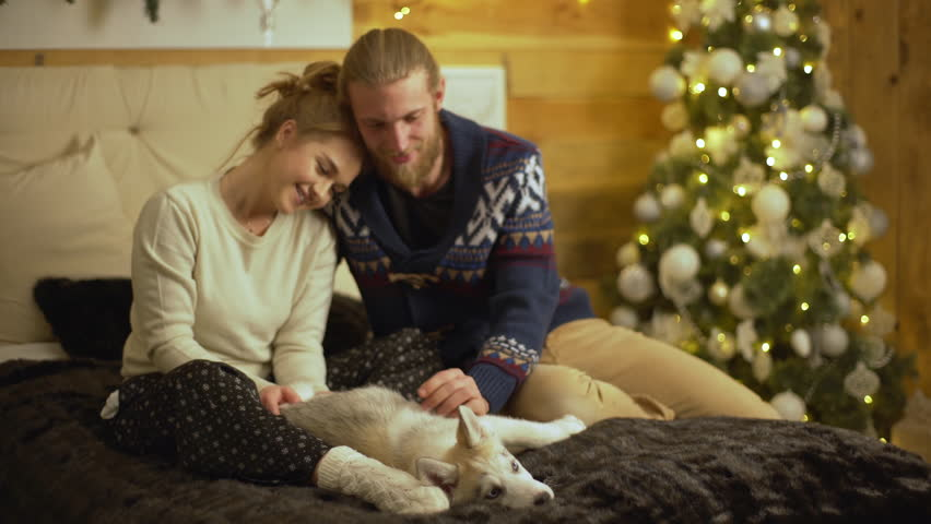 Nice portrait of beautiful couple sitting on bed taking pleasure in petting little husky dog enjoying spending time together during family Christmas evening | Shutterstock HD Video #34244650
