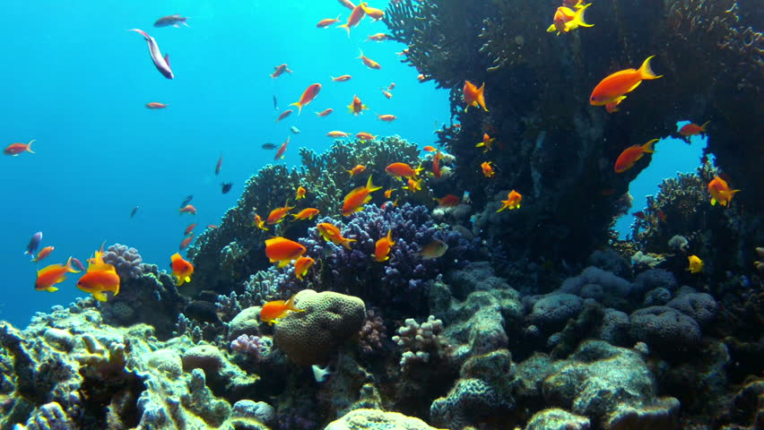 Coral and fish in the Red Sea.Egypt | Shutterstock HD Video #3425438