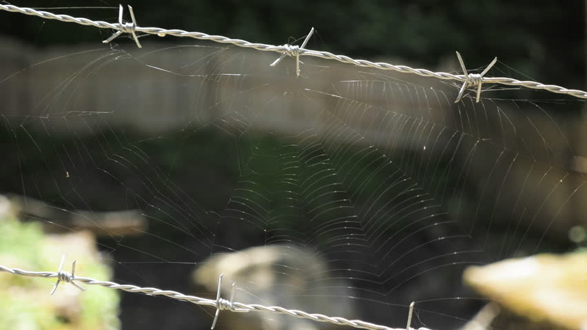 Spider web on barbed wire
