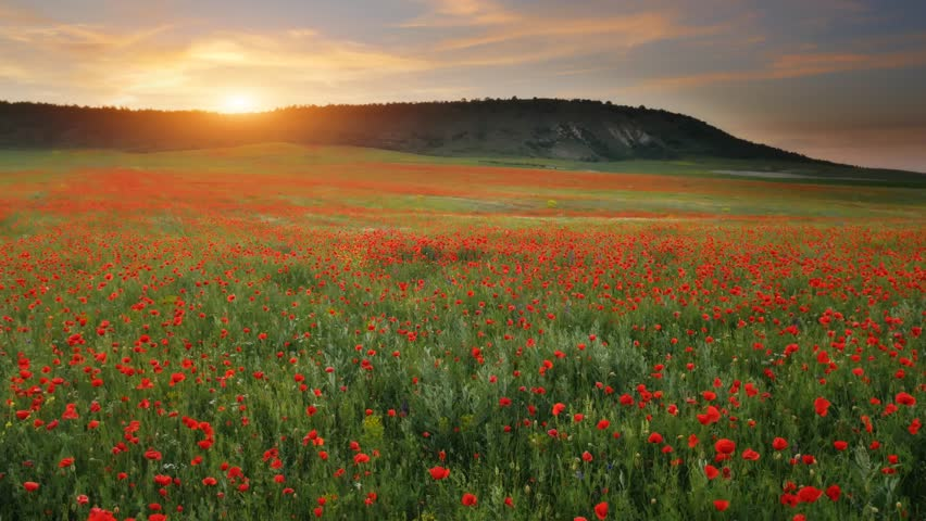 Spring flowers in meadow. Beautiful landscapes. | Shutterstock HD Video #34269214
