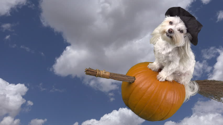 Adorable dog witch rides halloween pumpkin broom through blue cloud-filled  sky, time lapse. 4K UHD 3840x2160 & Motion  | Shutterstock HD Video #34279111