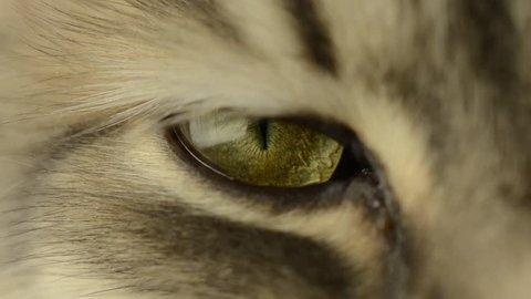 cat's eye close-up