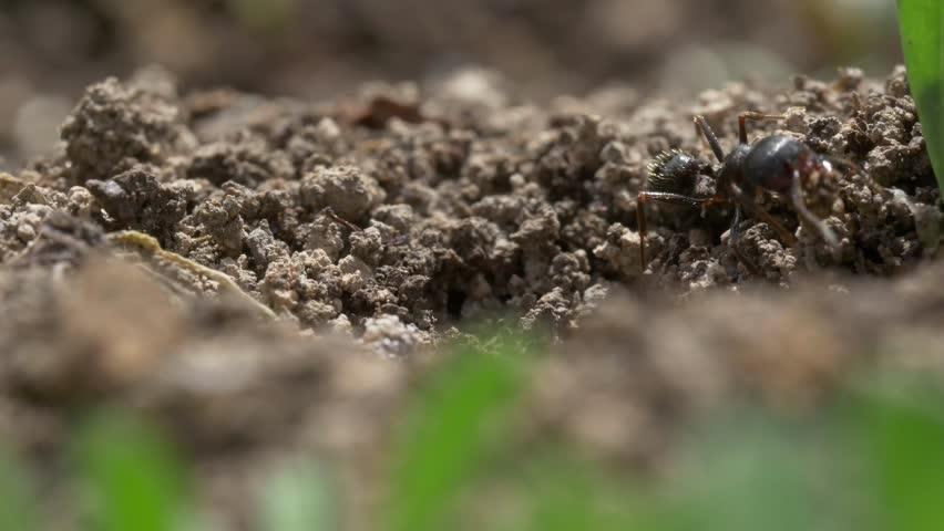 Closeup of ants nest | Shutterstock HD Video #34563181
