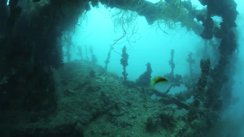 Shipwrecks from World War II litter Palau's lagoon.  Most of the wrecks are Japanese and were sunk on March 30 and 31, 1944 during Operation Desecrate One.  This wreck is the Iro, a massive tanker.