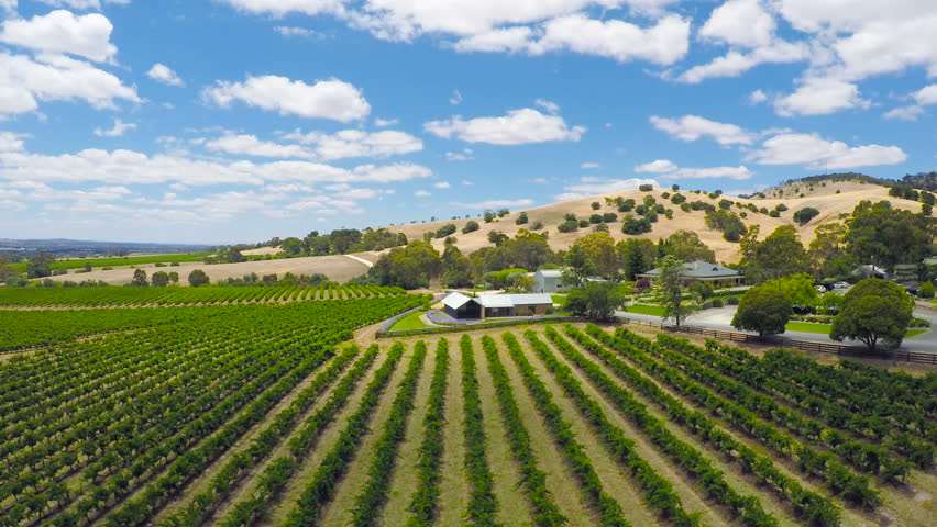 Drone aerial of the Barossa Valley, major wine growing region of South Australia, views of rows of grapevines and scenic landscape, taken from Lily Farm Road.