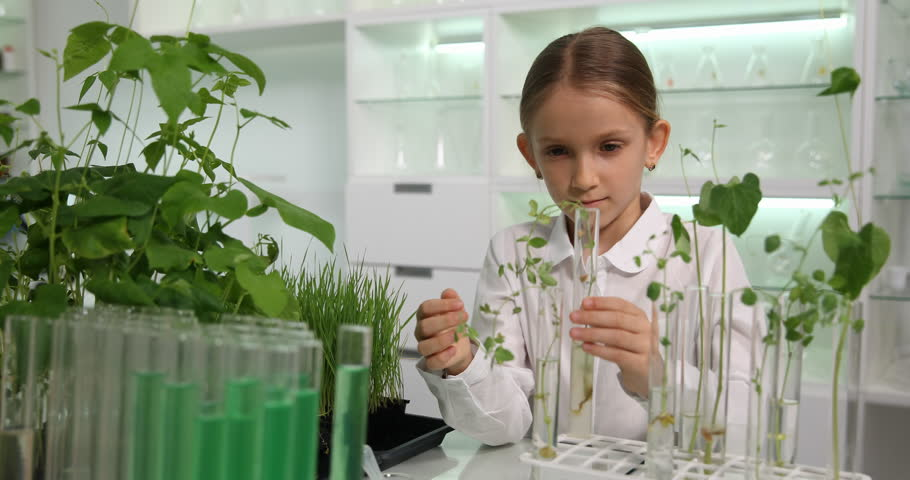 растения опыты картинки дизайн подойдет