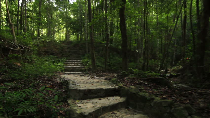 Deep Forest - Path with stone staircases through a deep forest inside a national park in Thailand, steadicam shot.   Shutterstock HD Video #3504989