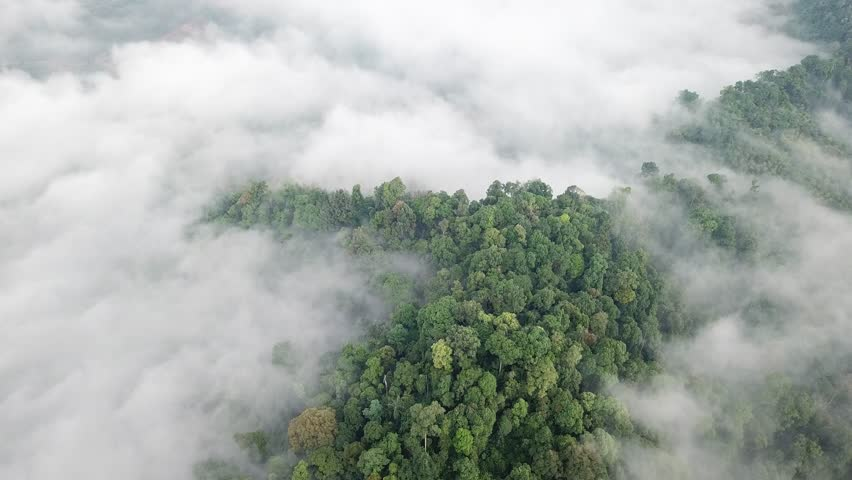 Aerial footage of rainforest. Jungle rain forest and clouds