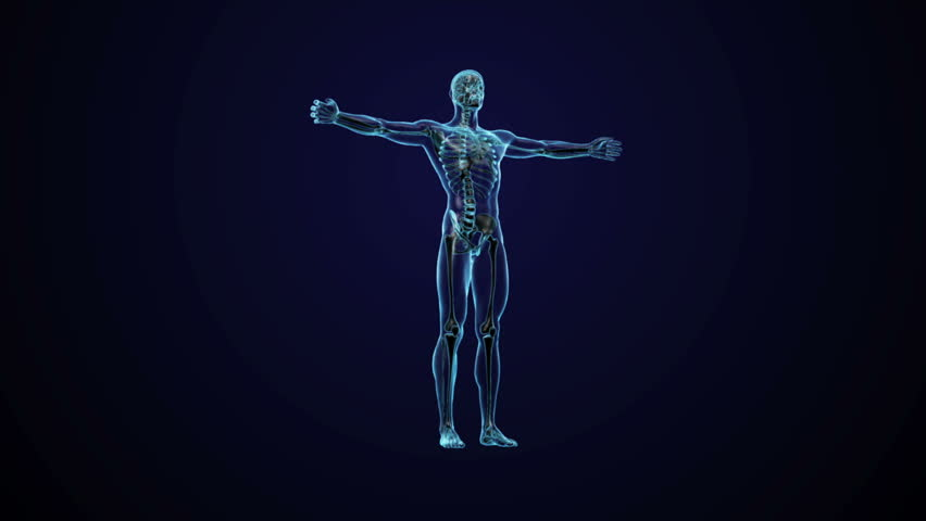 Human anatomy - CG animated seamless loop