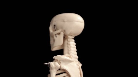 Model of skeleton rotating over black background closeup - Looping Video