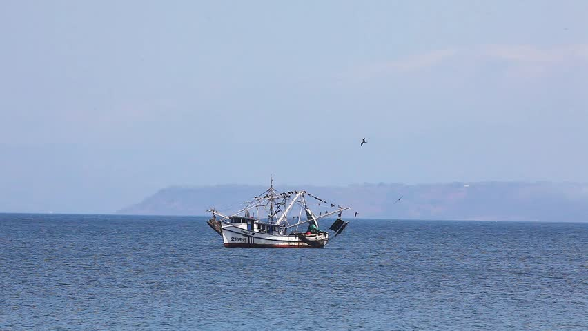 A fishing boat trawling off Costa Rica with seabirds following